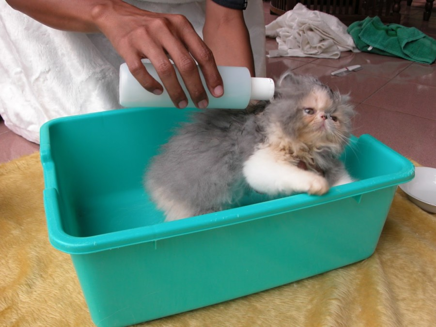 From : merawat-kucing15.blogspot.com