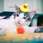10 Cara Mudah Memandikan Kucing Kampung dengan Baik dan Betul
