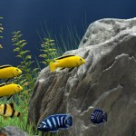 50+ Jenis ikan hias air tawar dan ikan yang hidup di air tawar Serta Penjelasannya