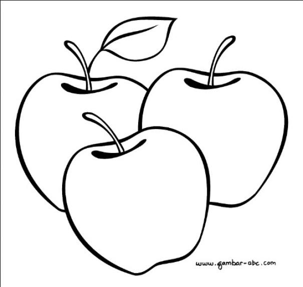 gambar sketsa buah apel