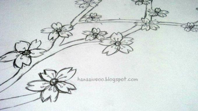 Gambar sketsa bunga sakura