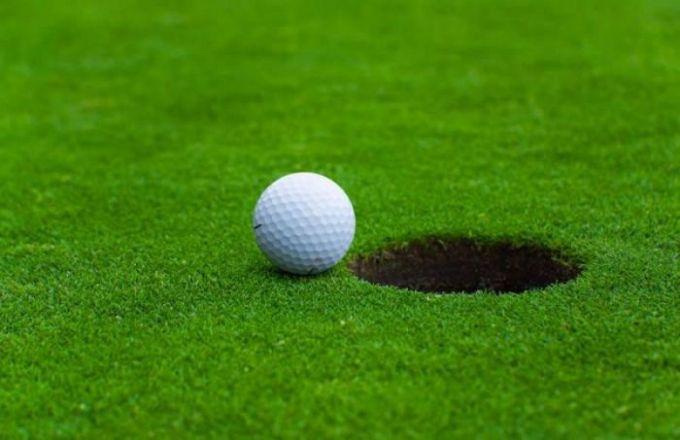 jual rumput golf murah