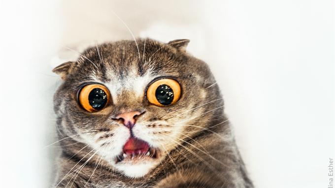 backgound kucing lucu