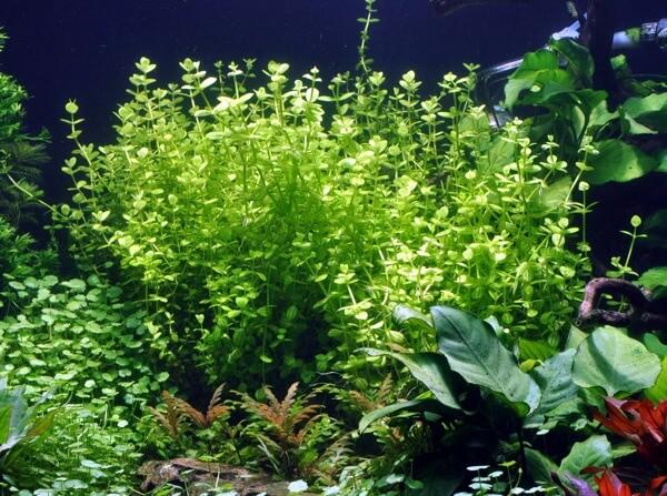 tanaman aquascape di sekitar kita