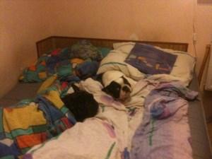 my się z łóżeczka nigdzie nie ruszamy