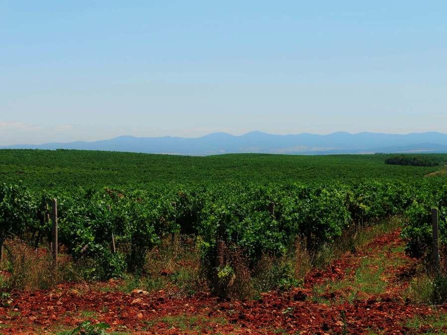 Bulgaria Wine Tours: Sakar Day Wine Tour