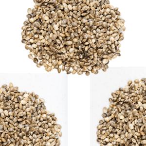 Hemp Grain Seeds