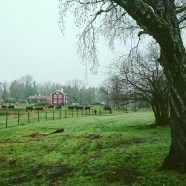 Simesgården