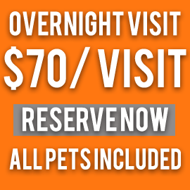 overnight pet sitting $70.00 a visit