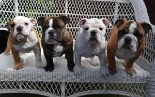 Bulldog Support