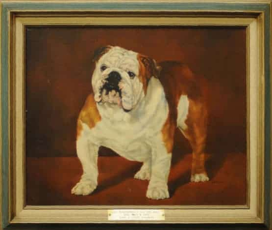 Best of Breed: Ch. Marinebull's All The Way