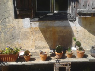 cactus (2)