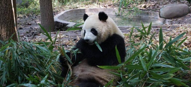 Le Sichuan, ses pandas, ses paysages et sa fondue !