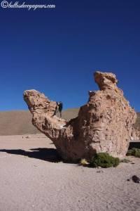 camel uyuni