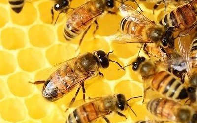 Criticism and the Beehive