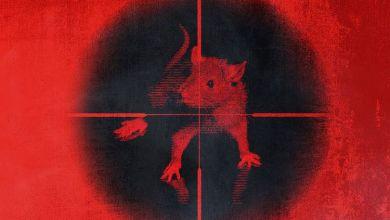 Photo of Music: Kodak Black – Killing The Rats