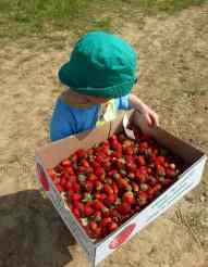 Roadtrip mit Kind - spontanes Erdbeerpflücken