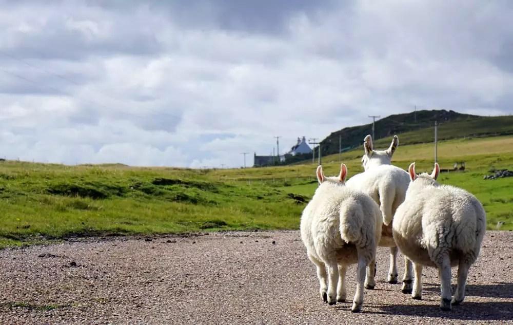 Roadtrip – Mit dem VW-Bus durch Schottland