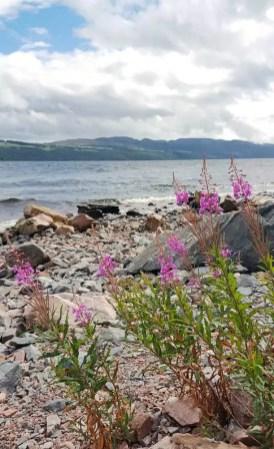 Loch Ness Blumen
