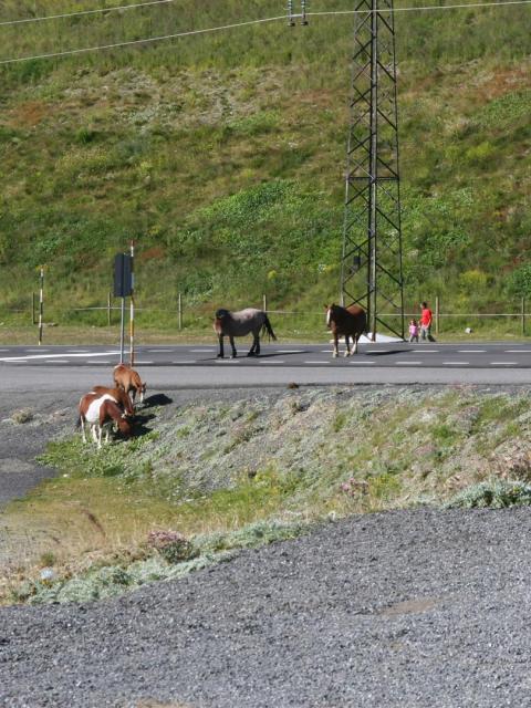 Pferde in Andorra