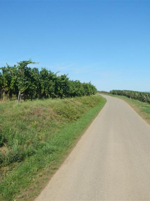 AlsaceRadweg
