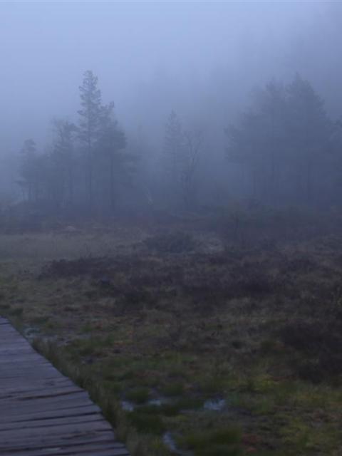 Nebel Preikestolenwanderung