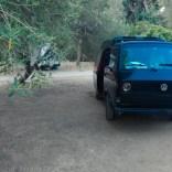 VW Bulli unter Olvenbaäumen