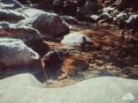 Badegumpen in der Spelunca Schlucht