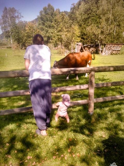 Campingurlaub auf dem Bauernhof