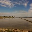 Deltebre (1) Reisfelder
