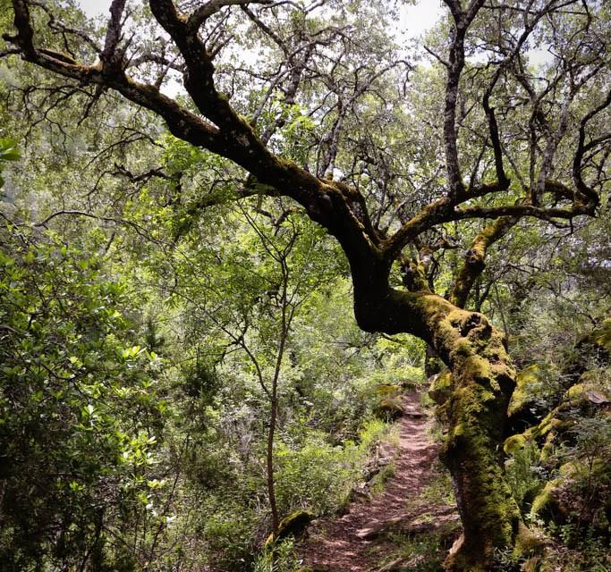 Nationalpark Monfragüe Extremandura