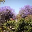 Wie besuchen den absolut sehenswerten Garten, Jardim do Largo, im alten Castello