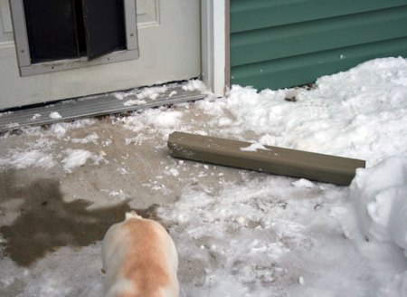 Fanny pulling the downspout through the dog door