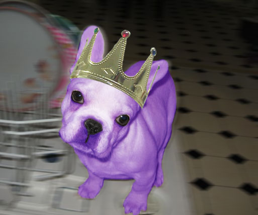 Purple French Bulldog