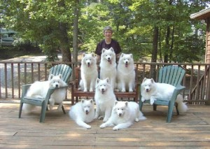 Kathy Pendleton and Samoyeds