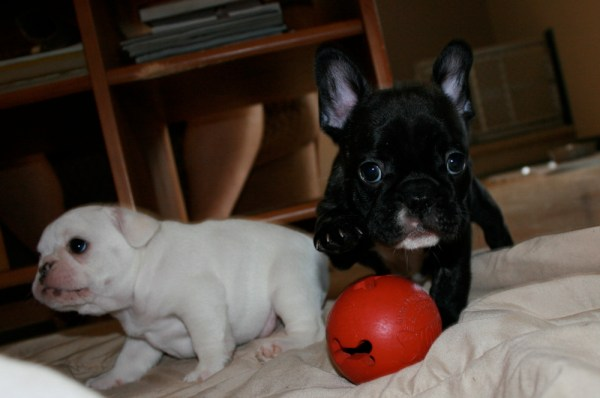 Pickle with her red ball (Leah in the background)