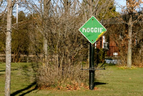 """A """"Moggie"""" road sign - cats live here?"""