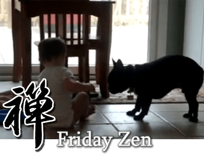 French Bulldog plus babies equals Friday Zen