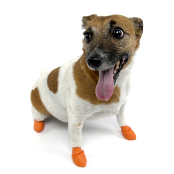 Pawz dog boots are great for senior dogs and degenerative myelopathy dogs