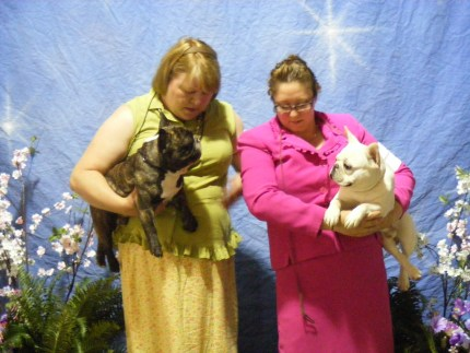 French Bulldogs at Kalamazoo dog show - Bullmarket Absolut Darkly Dexter and Bullmarket NewHope at SpiritDragon