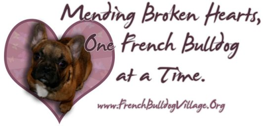 Mending Broken Hearts, One French Bulldog at a Time