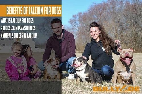 calcium for dogs treatment