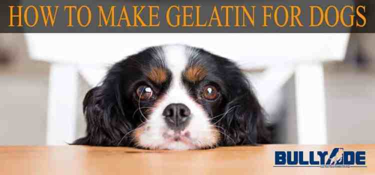 gelatin for dogs