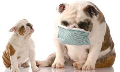 New Dog Flu