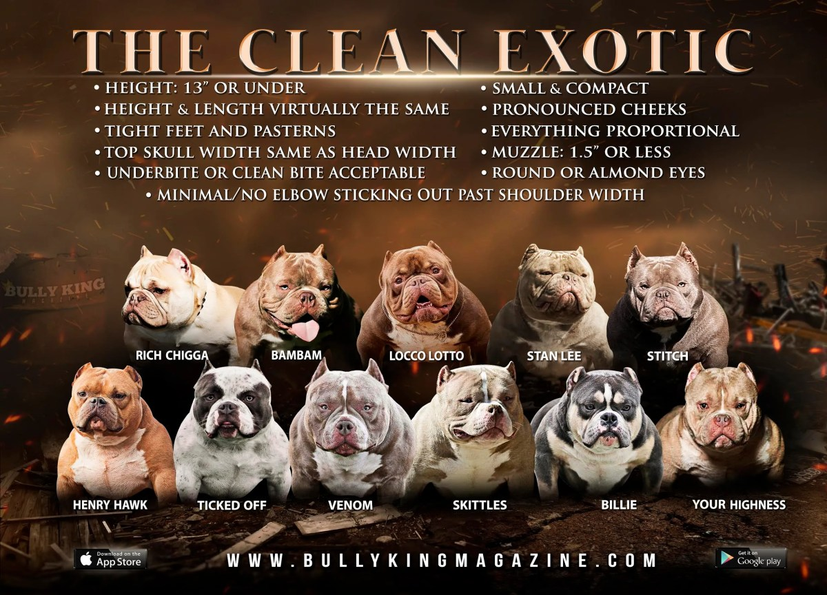 "What Is An Exotic Bully & What's A ""Clean Exotic?"""