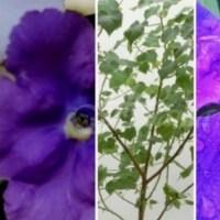 Пет стайни цветя, които привличат любовта към вашия дом