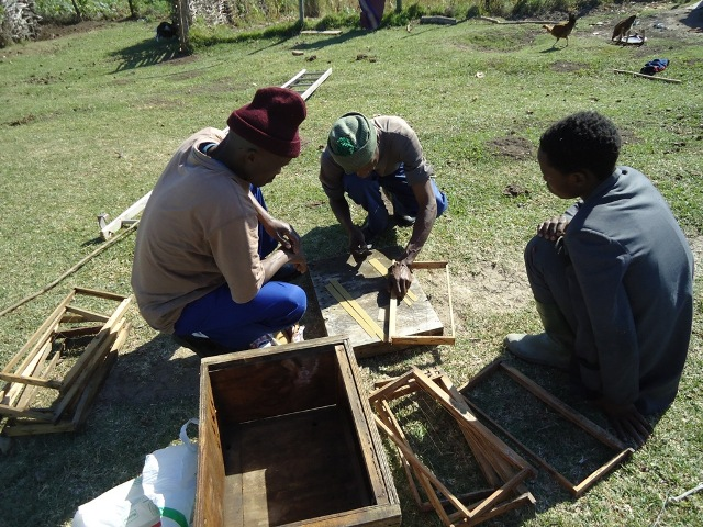 Faku, Jolibhadi and Siyabonga fixing the hives