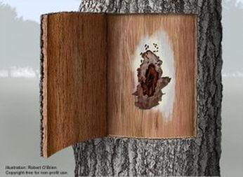 tree with termite damage