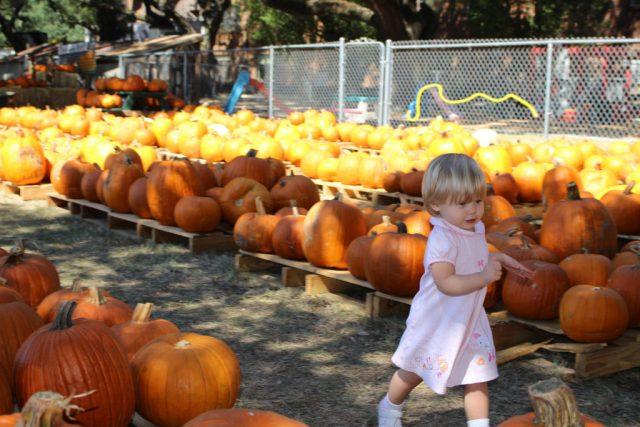 runningthrough-pumpkinpatch