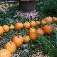 Ballycross Apple Farm - Autumn 2015 Visit
